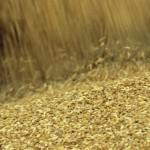Турция и Египет остаются лидерами по покупкам российского зерна