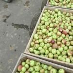 Молдавские фермеры уверены, что европейские аграрии повторят их судьбу