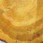 Что скрывают годичные кольца деревьев