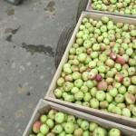 Логин: ЕС не спешит отменять пошлины на продукцию из Молдавии