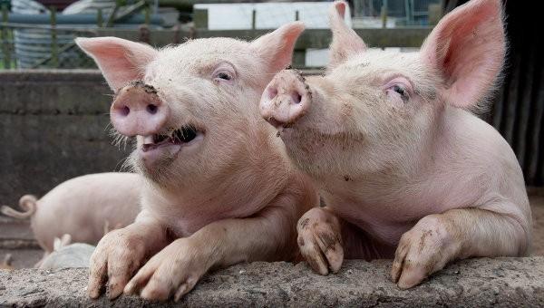 Австрия повезет в Китай свинину