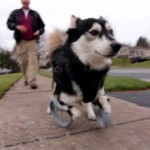 3D-принтер подарил собаке-инвалиду новую жизнь