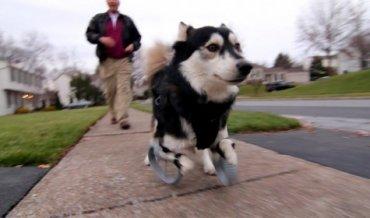 3D-принтер подарил собаке жизнь