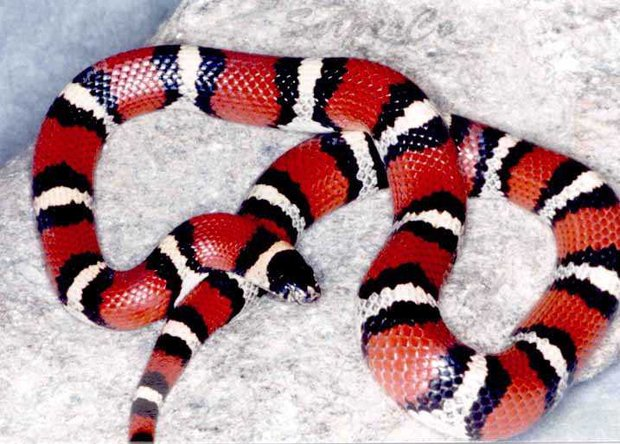 таможенники нашли12 змей