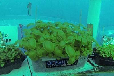 растительные культуры под водой
