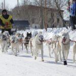 Завершилась очередная гонка на собачьих упряжках Берингия – 2019. Часть 1